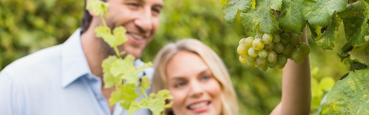 Ртвели — главный праздник грузинских виноделов